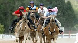 camel racing 2