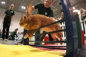 bunny hopping